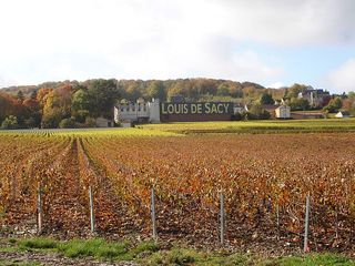 Loius de Sacy from across the vineyard October 2009